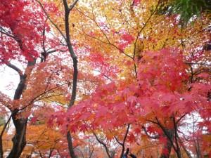 ○○の秋の由来は?食欲の秋は?読書の秋は?スポーツの秋は?